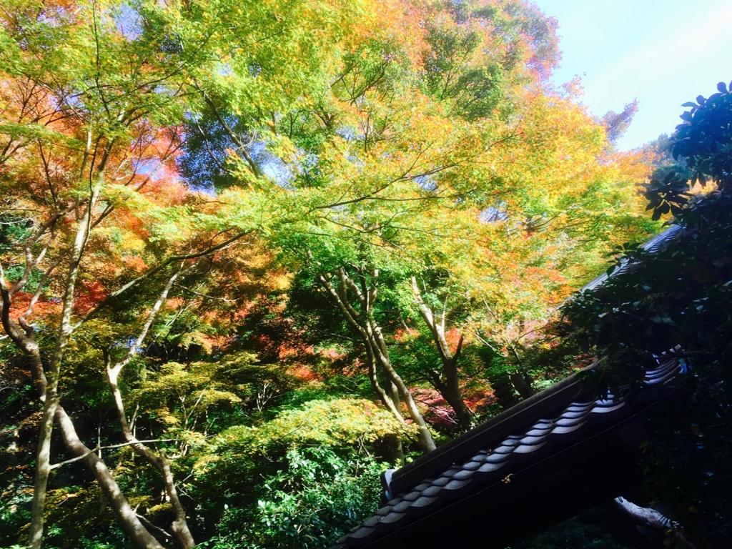 f:id:syuuichirou-k:20161117031609j:plain