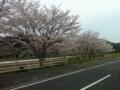 [袋井市]桜
