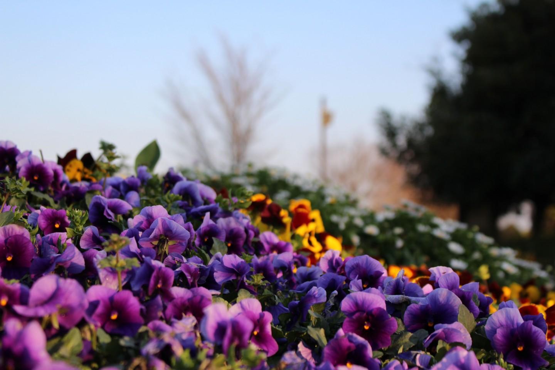 きたみ ふれあい広場の花壇の写真