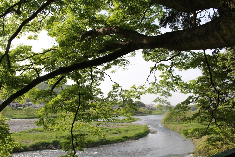 羽村市羽加美 阿蘇神社からの景色の写真