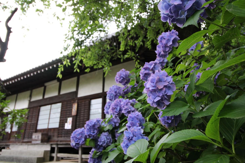 稲城市矢野口 雲騰山妙覚寺の写真2