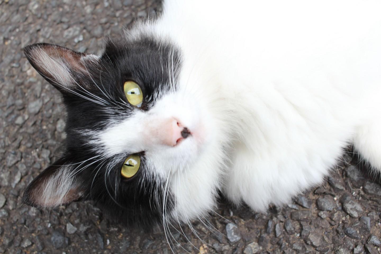 夏蒐山修廣寺の猫の写真