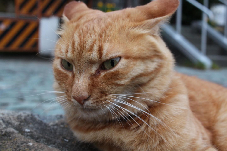 江ノ島の猫の写真1