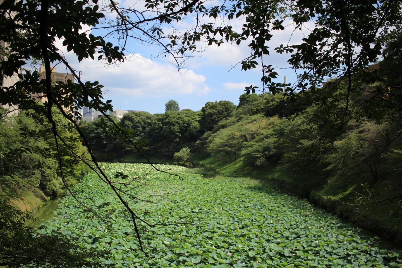 千代田区 千鳥ヶ淵の写真1