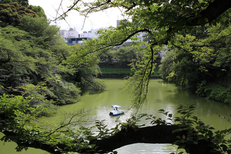 千代田区 千鳥ヶ淵の写真2