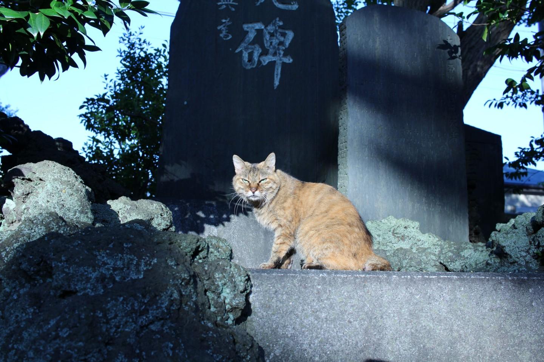 千葉市中央区蘇我 蘇我比め神社の猫の写真1