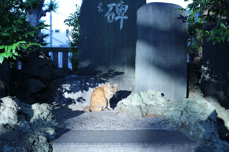 千葉市中央区蘇我 蘇我比め神社の猫の写真2