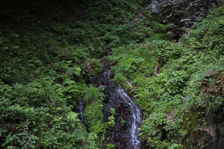飯能市 高麗川の源流の写真2