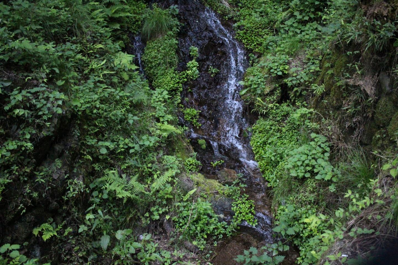 飯能市 高麗川の源流の写真3