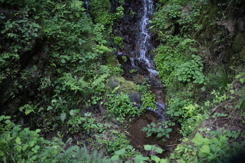 高麗川の源流の写真