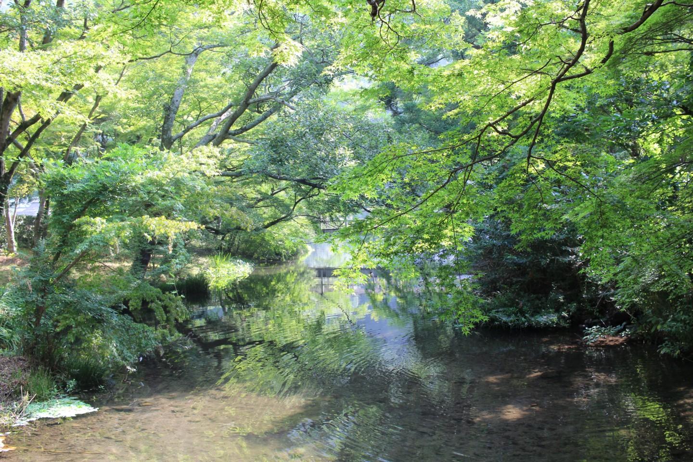 金鱗湖の写真2