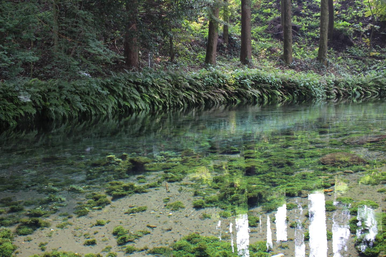 白川水源の写真2