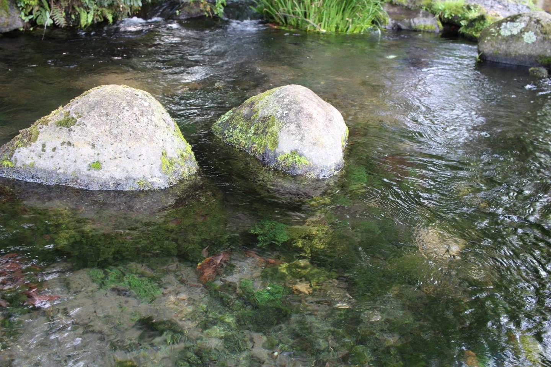 池の川水源の写真1