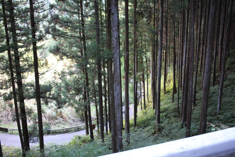大ダワ峠・鋸山林道の写真2