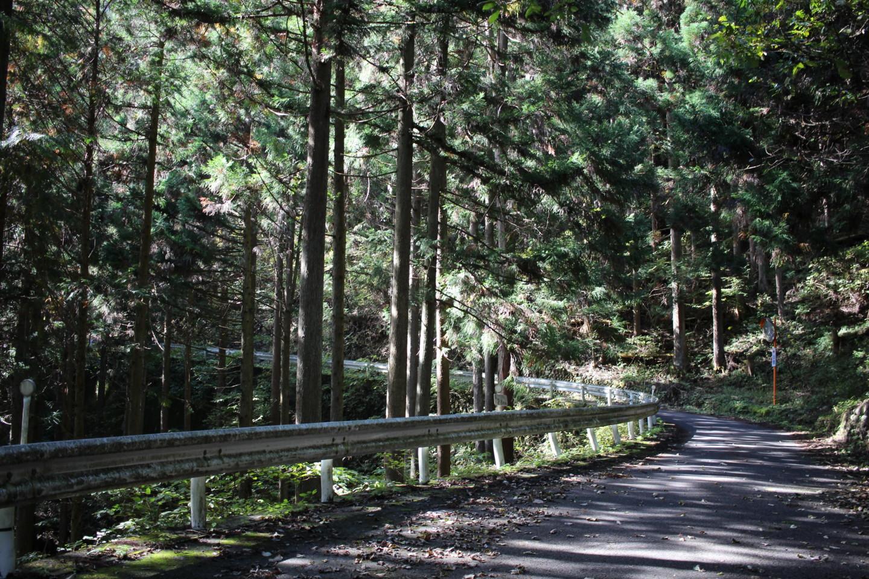 大ダワ峠・鋸山林道の写真3