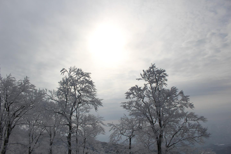 森吉山阿仁スキー場の霧氷の写真2