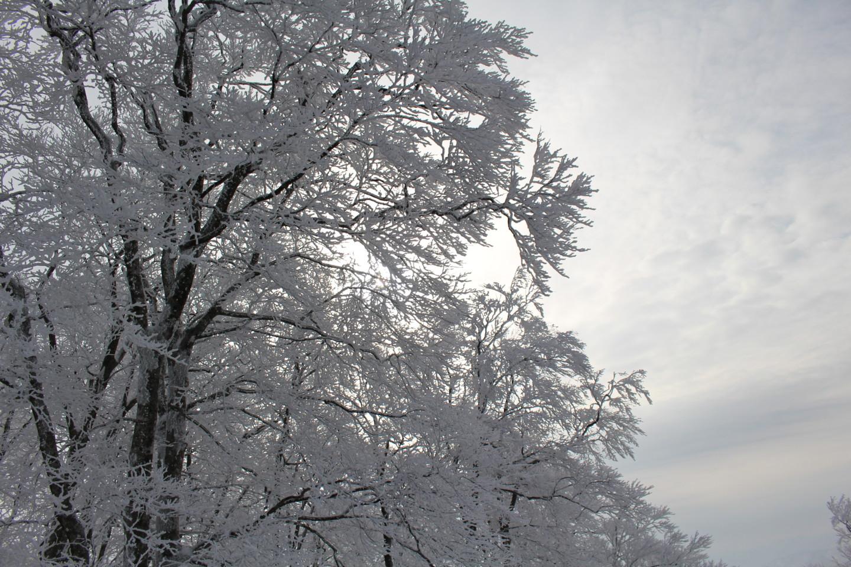 森吉山阿仁スキー場の霧氷の写真3