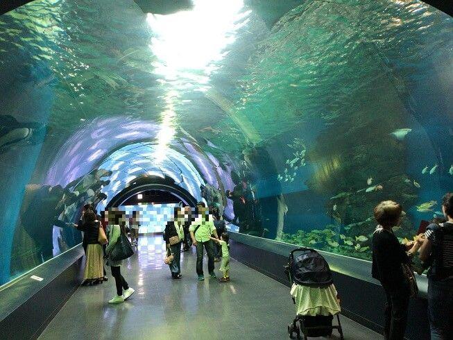 アクアパーク品川の水中トンネル