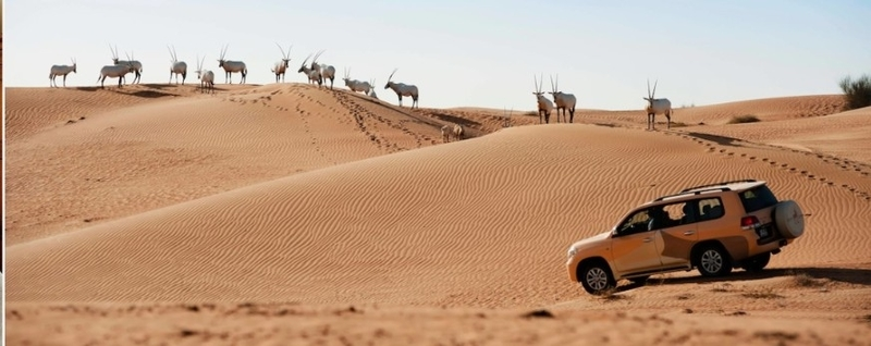 砂漠ドライブ