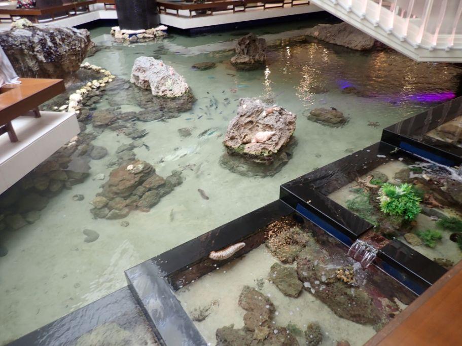 シェラトン沖縄サンマリーナリゾートのフロント前の海洋生物