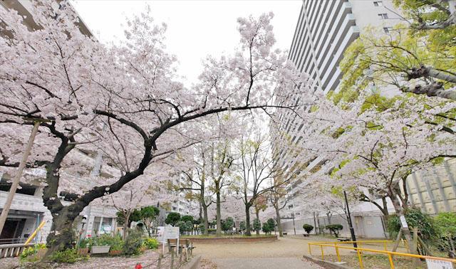 f:id:t-shimozono:20171110224050j:plain