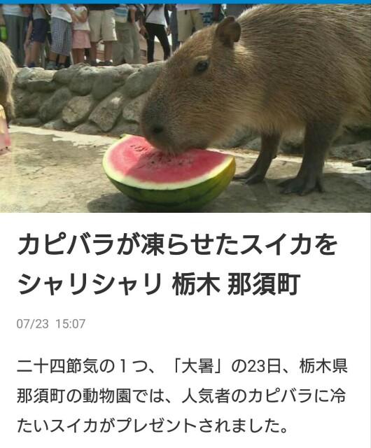 f:id:t1000zawa:20180724091155j:image