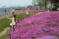 京都新聞写真コンテスト・芝桜と私たち