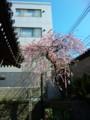 赤坂の美容院近くのお寺