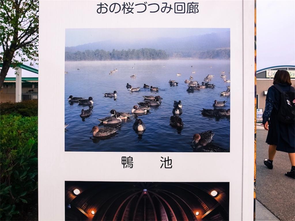 f:id:t_yamarimo:20171002231203j:image