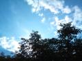 [店のテラス] トネリコと空
