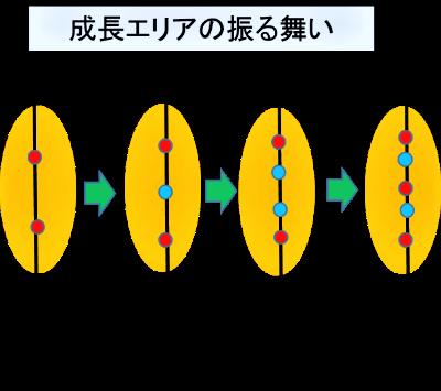 f:id:taamori1229:20170304230136p:plain