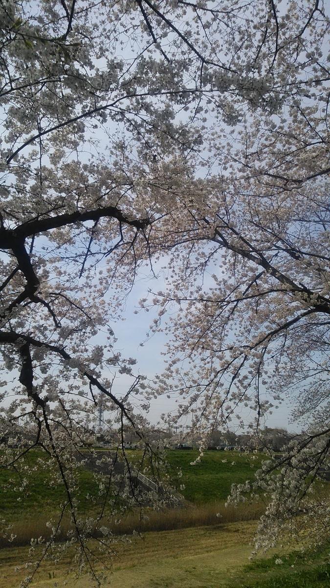 f:id:tabineko-hikari:20210329210155j:plain