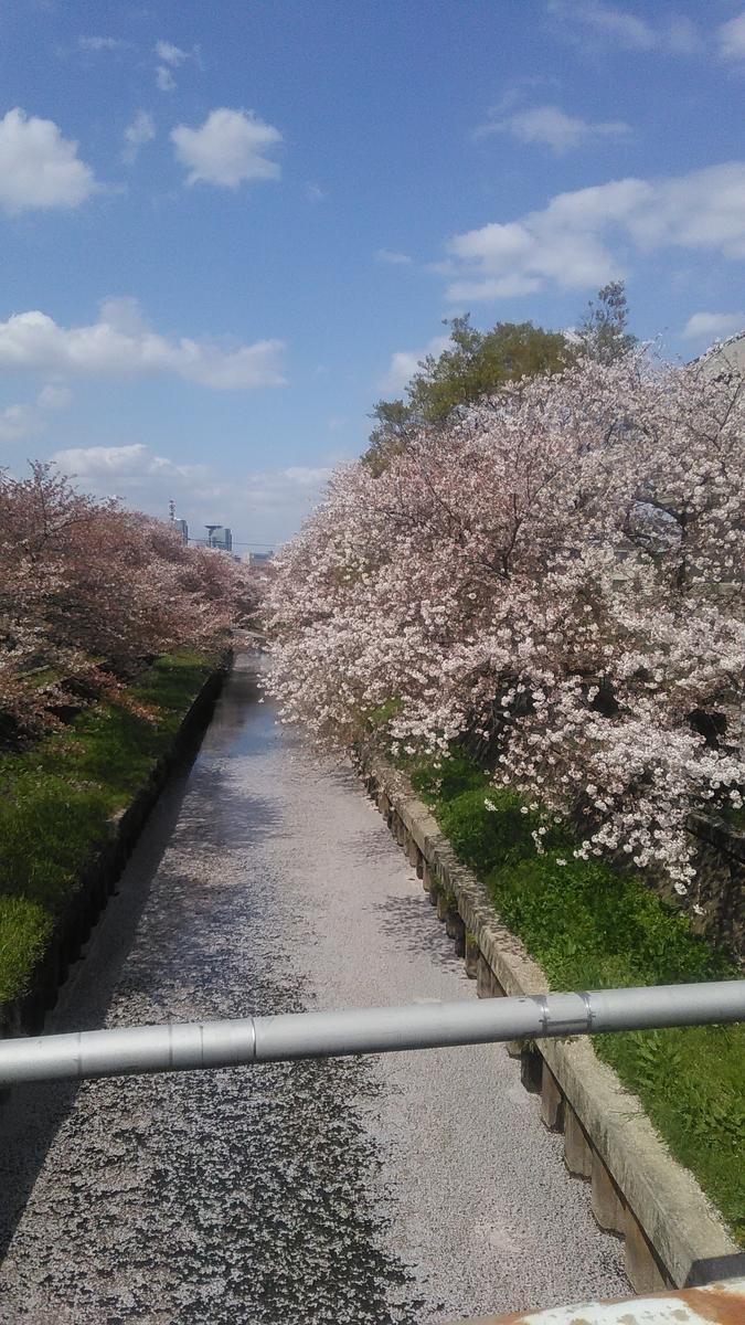f:id:tabineko-hikari:20210411101848j:plain