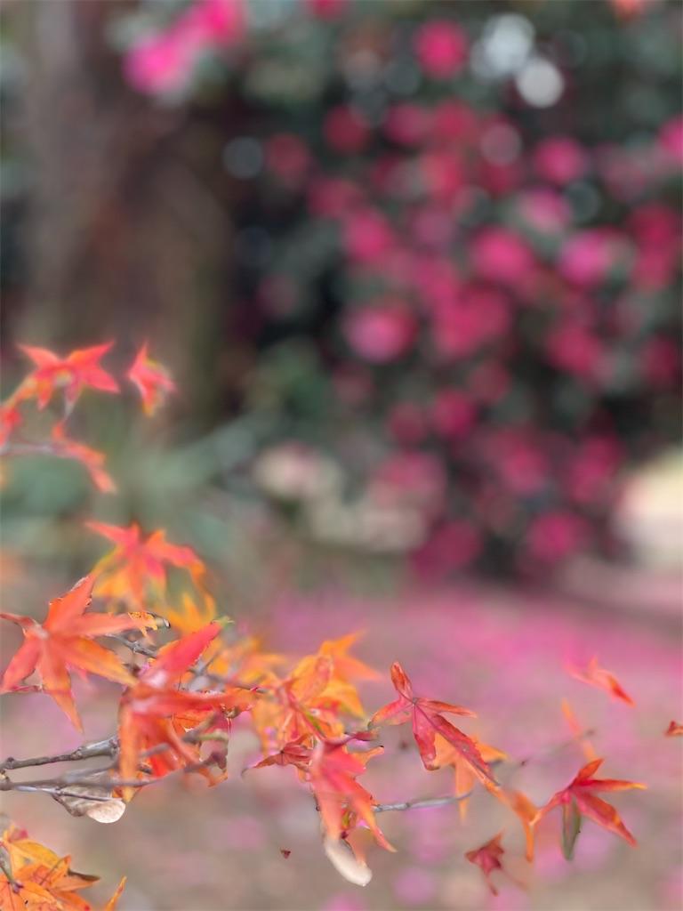 f:id:tabiryokouchang:20201215085344j:image