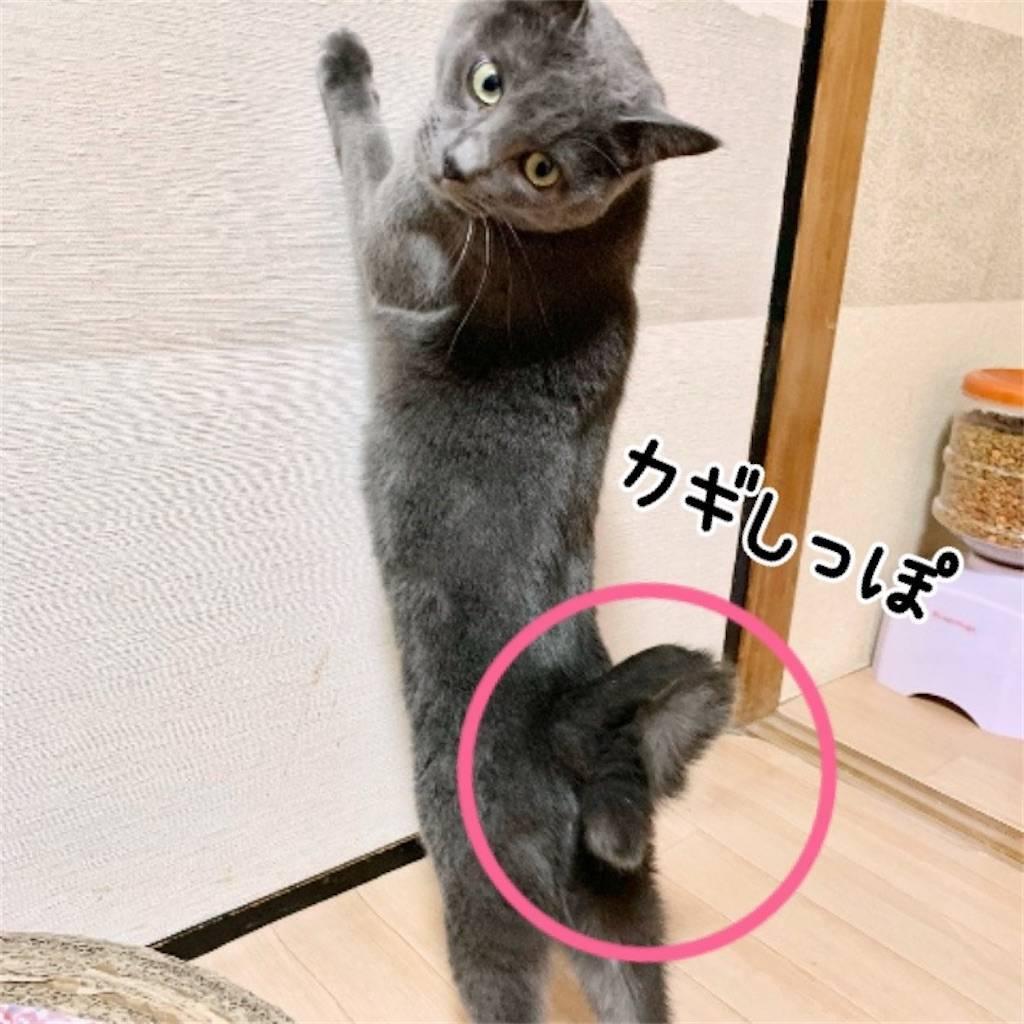 f:id:tabishite_korea:20210210175314j:image