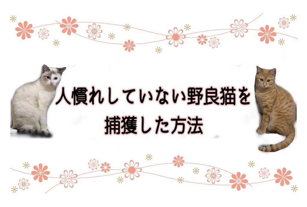 f:id:tabishite_korea:20210211174643j:image