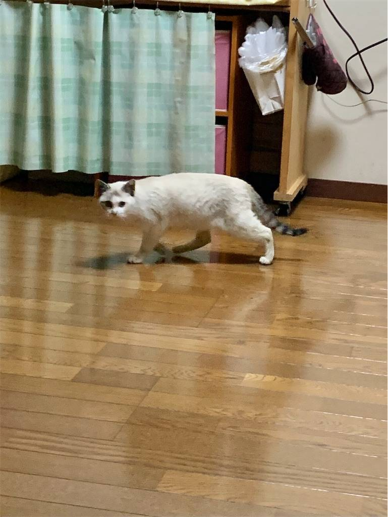 f:id:tabishite_korea:20210211175152j:image