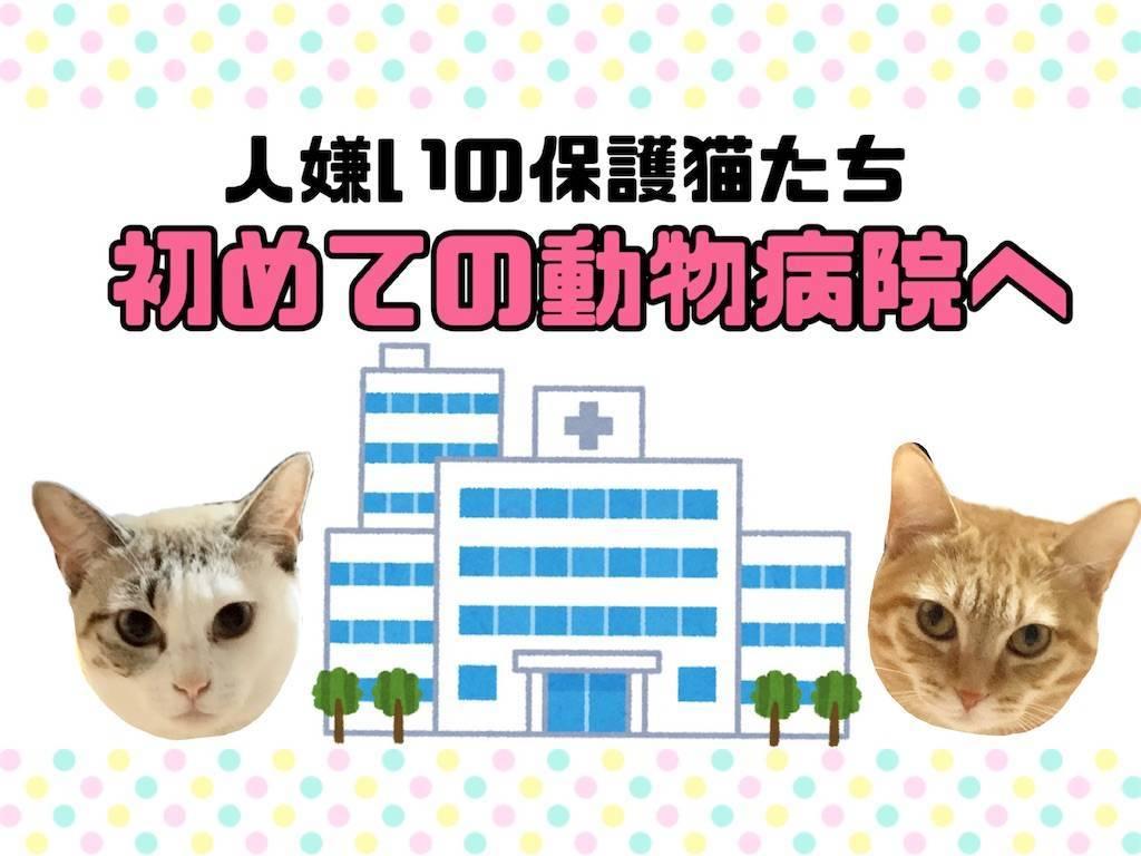 f:id:tabishite_korea:20210213123748j:image