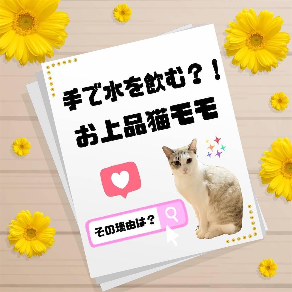 f:id:tabishite_korea:20210221145659j:image