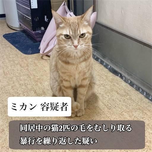 f:id:tabishite_korea:20210322135902j:image