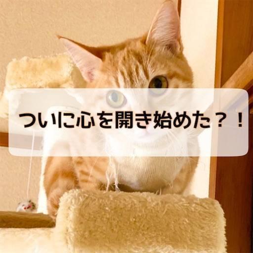 f:id:tabishite_korea:20210324114414j:image