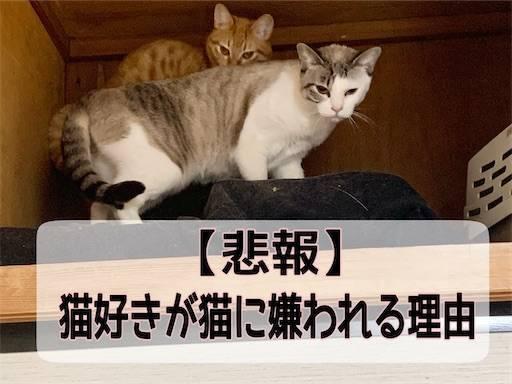 f:id:tabishite_korea:20210401161809j:image