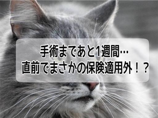 f:id:tabishite_korea:20210410185912j:image