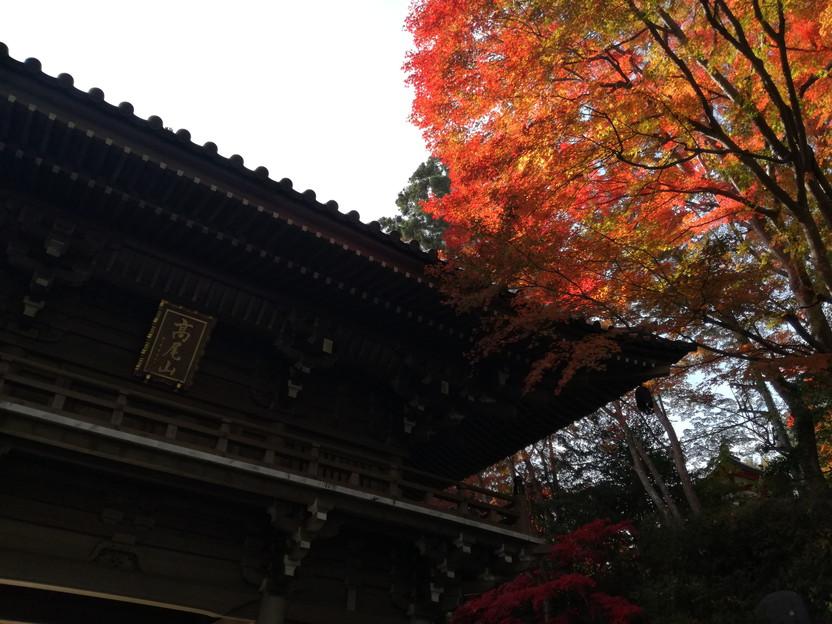 f:id:tabisuru-iwao:20161119212900j:plain