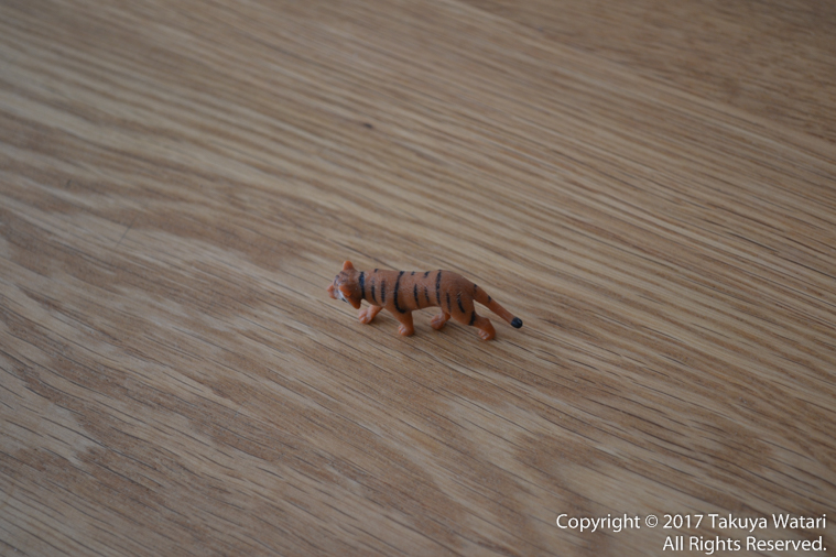 3Dトラッキングでまずは真ん中のトラにピントを合わせる