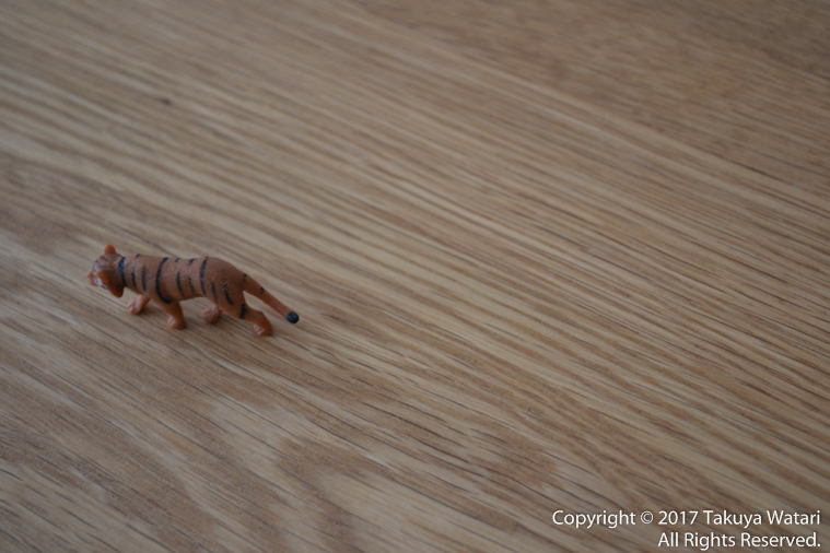 3Dトラッキングで虎にピントを合わせた状態で構図を変えるとピントが合い続けた