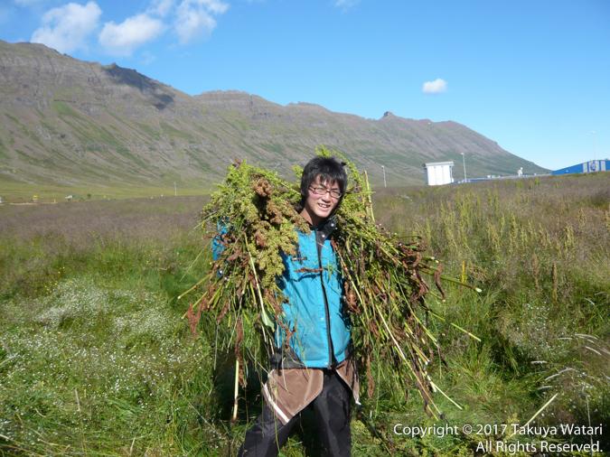 アイスランドで国際ボランティア