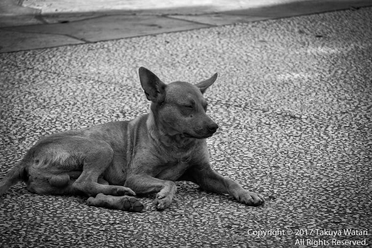 温かな陽の光を浴びるのが気持ちよさそうなハバナの犬