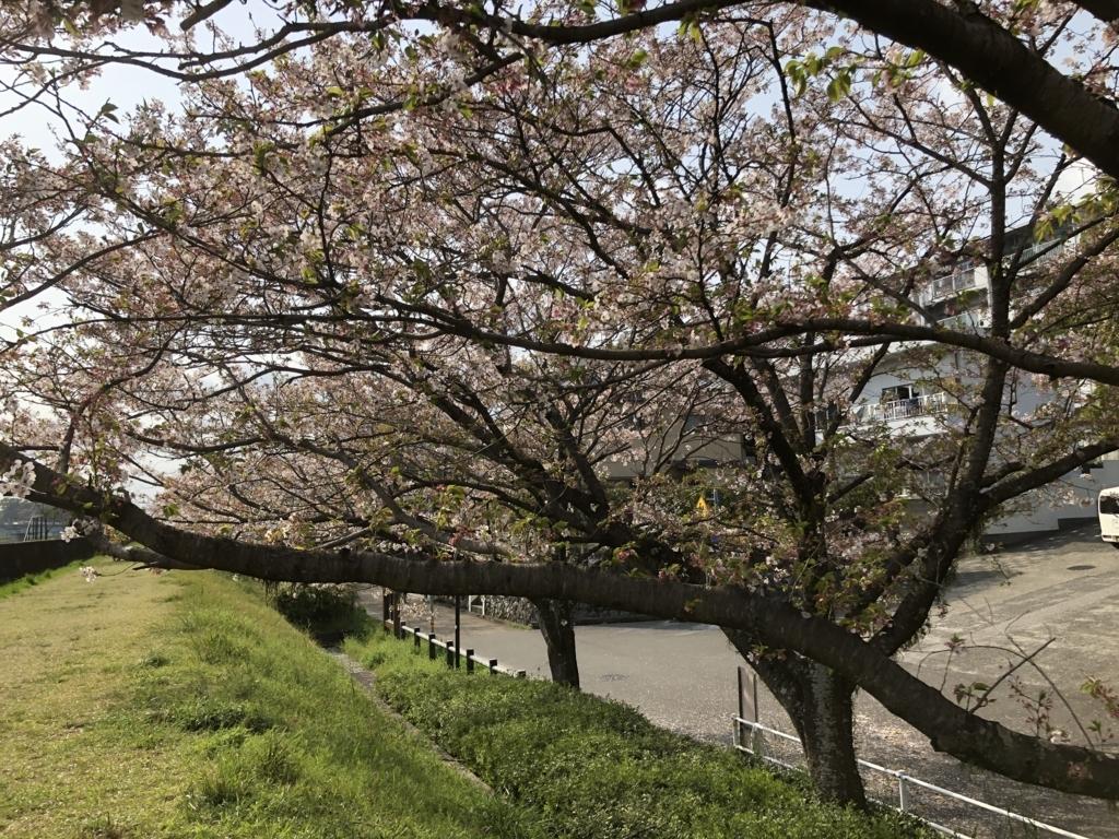 f:id:tachibanaya-shop:20180401184855j:plain