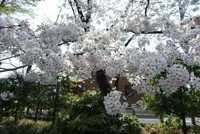 f:id:tachikawa-mac:20180328160606j:plain
